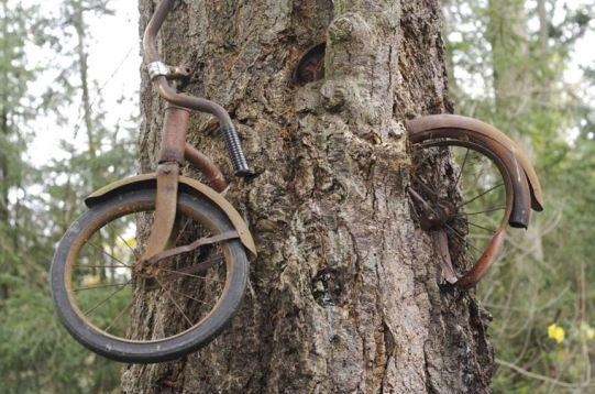 bici-furti
