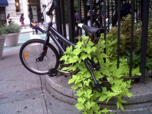 bici-abbandonate-3