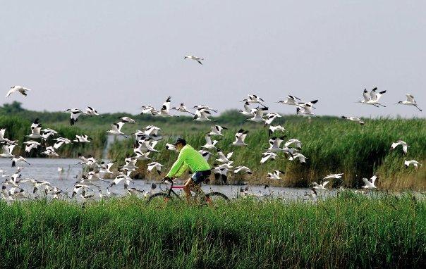 In Bici Sul Delta Del Po Itinerario E Informazioni