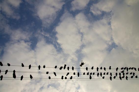smirne-uccelli
