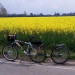 bici-rimorchio