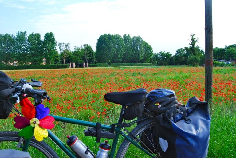 bici-papaveri