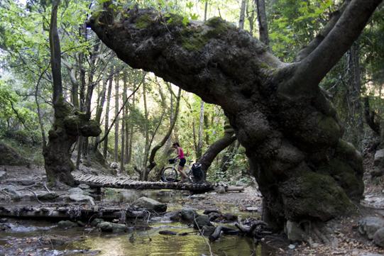 Pinar ponte di legno