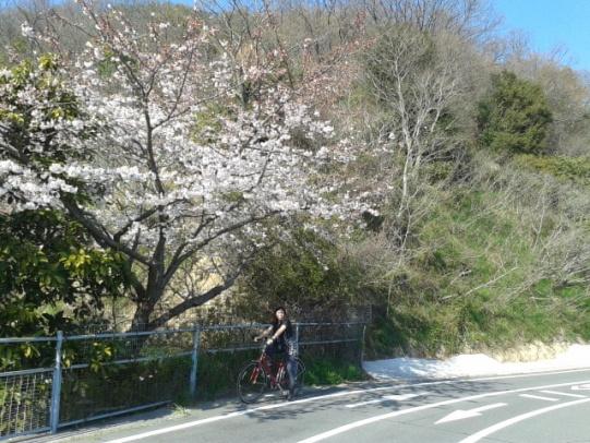 Shimanami-Kaido-15