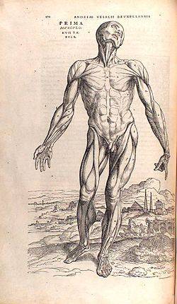 Anatomia Del Ciclista E Uso Dei Muscoli