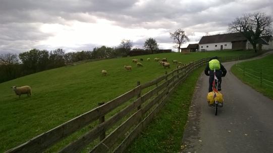 Austria, un allevamento di pecore