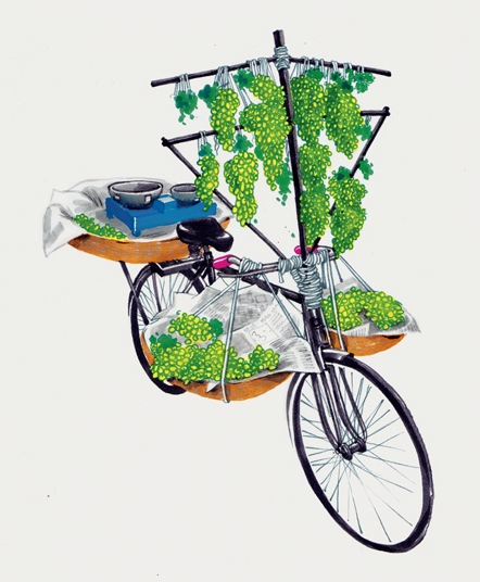 ghoda-bici-india-2