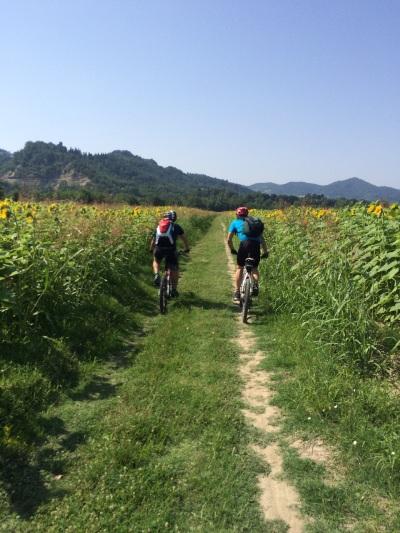 campi di girasole poco fuori Bologna