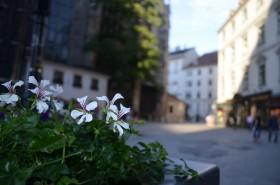 Vienna, fiori