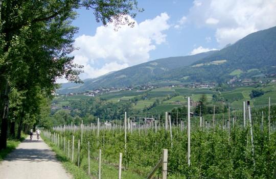 l'inizio della pista ciclabile poco fuori Merano, tra meli e colline