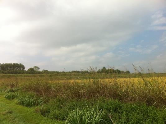 Paesaggio padano, oltre gli argini e i pioppeti