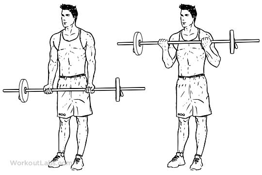 Allenamento braccia