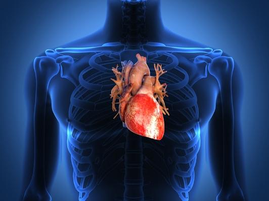 Il cuore di un ciclista con cardiofrequenzimetro