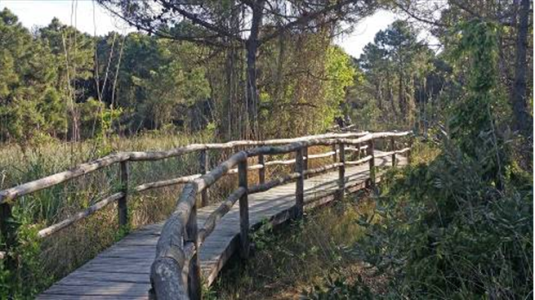 Passaggio sospeso nella riserva naturale