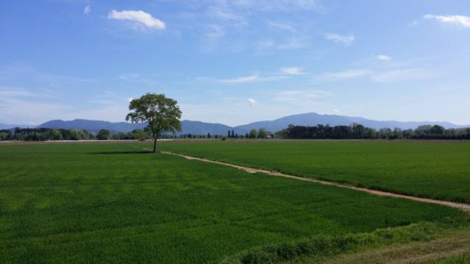 Panorama campestre