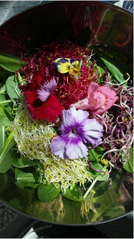 Avete mai mangiato un'insalata di fiori?