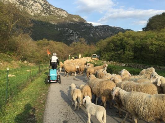 14 incontro con le pecore