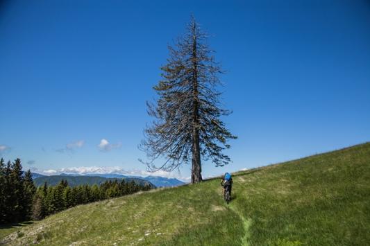 06 albero solitario by Marco Gober-7381