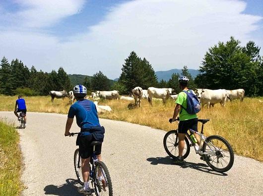 vacche-bikers