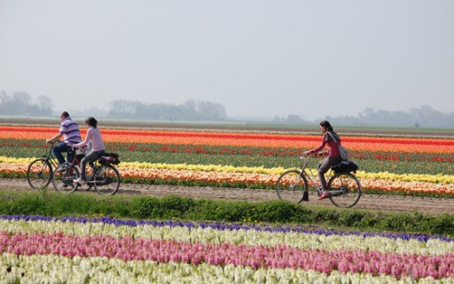 tulipani-olanda