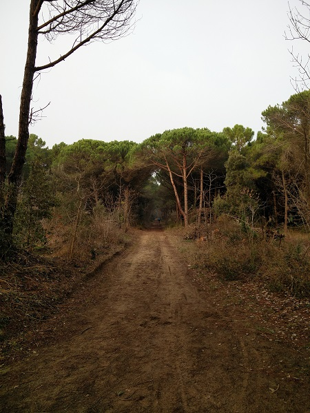 venezia-isole-bici-9