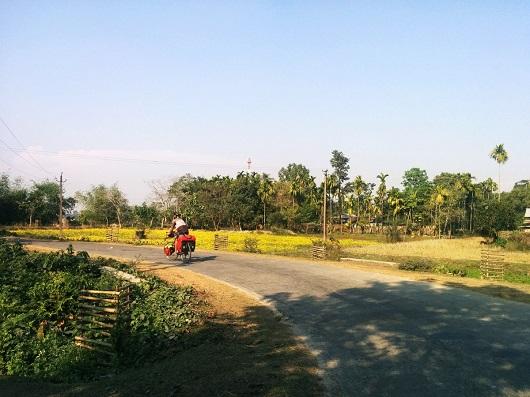 campi gialli