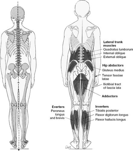 Postura in osservazione posteriore