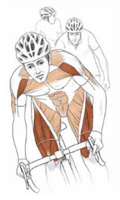 Muscoli del ciclista in bici