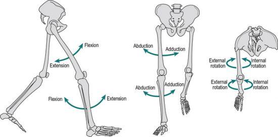 Movimenti articolazioni arti inferiori