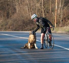 Ciclista e cane