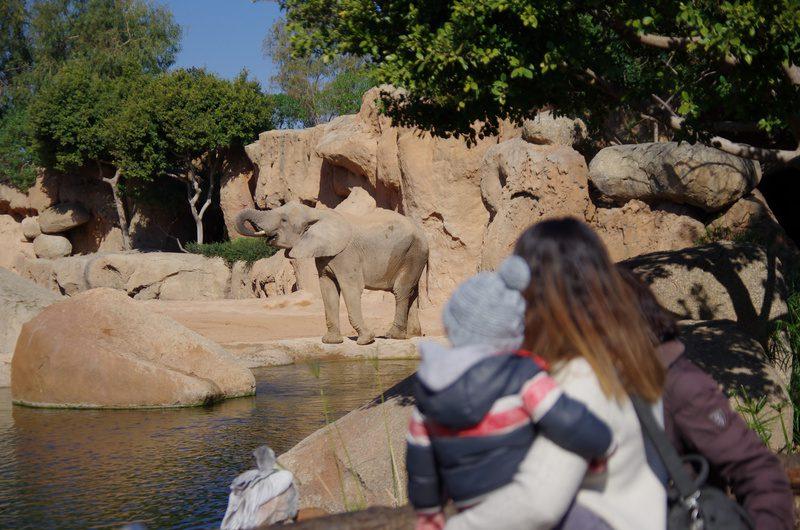 valencia-bioparc-zoo