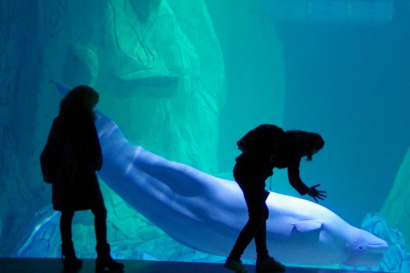 valencia-oceanografic-acquario