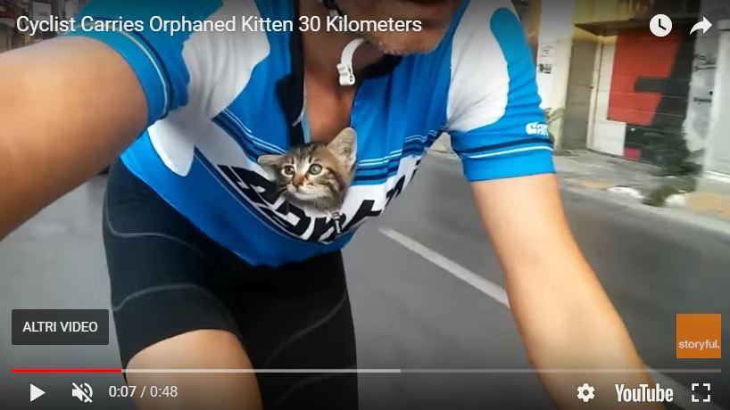 gattina in bici
