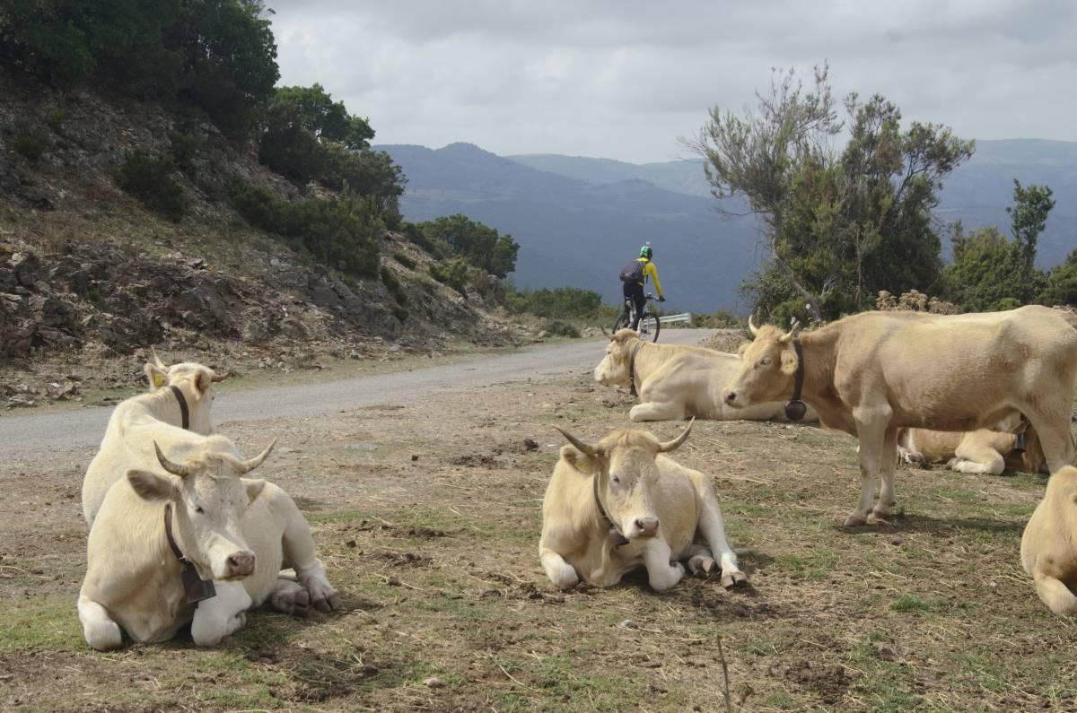 In bici in Sardegna crediti Sardovagando