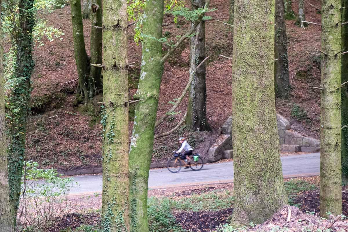 In bici tra gli alberi secolari dei Parchi della Calabria