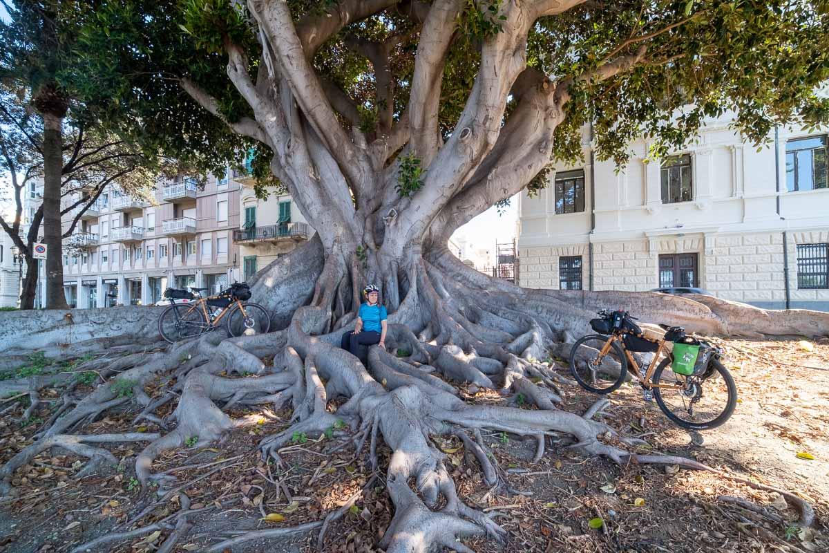 Reggio Calabria bici albero