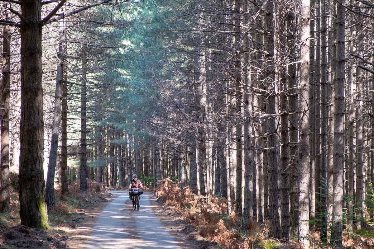 In bici in mezzo alla natura dell'Aspromonte