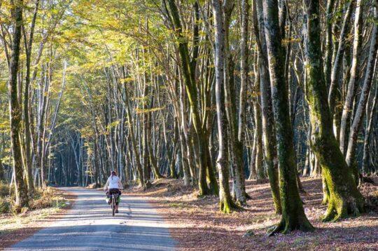 Aspromonte alberi e verde