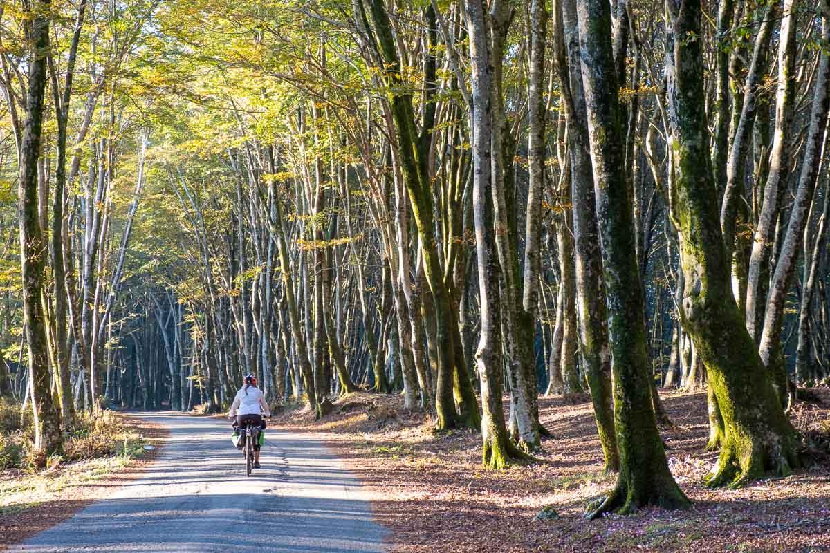 Bosco in Aspromonte con alberi e verde