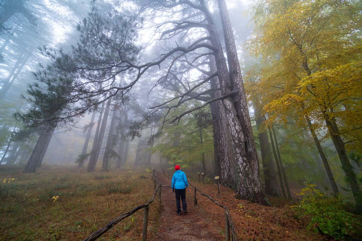 Natura nel Parco della Sila - Calabria