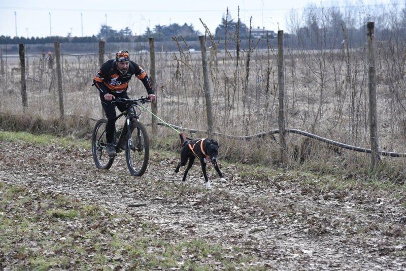 Cane bici bikejoring Alessandro Usignolo