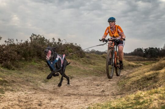 Bikejoring https://www.flickr.com/photos/haroldmeerveld/23869805365/in/photostream/