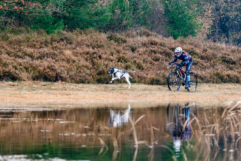 Bikejoring https://www.flickr.com/photos/haroldmeerveld/23340159306/in/photostream/