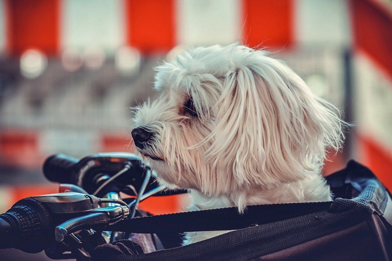 Viaggiare e portare il cane in bicicletta