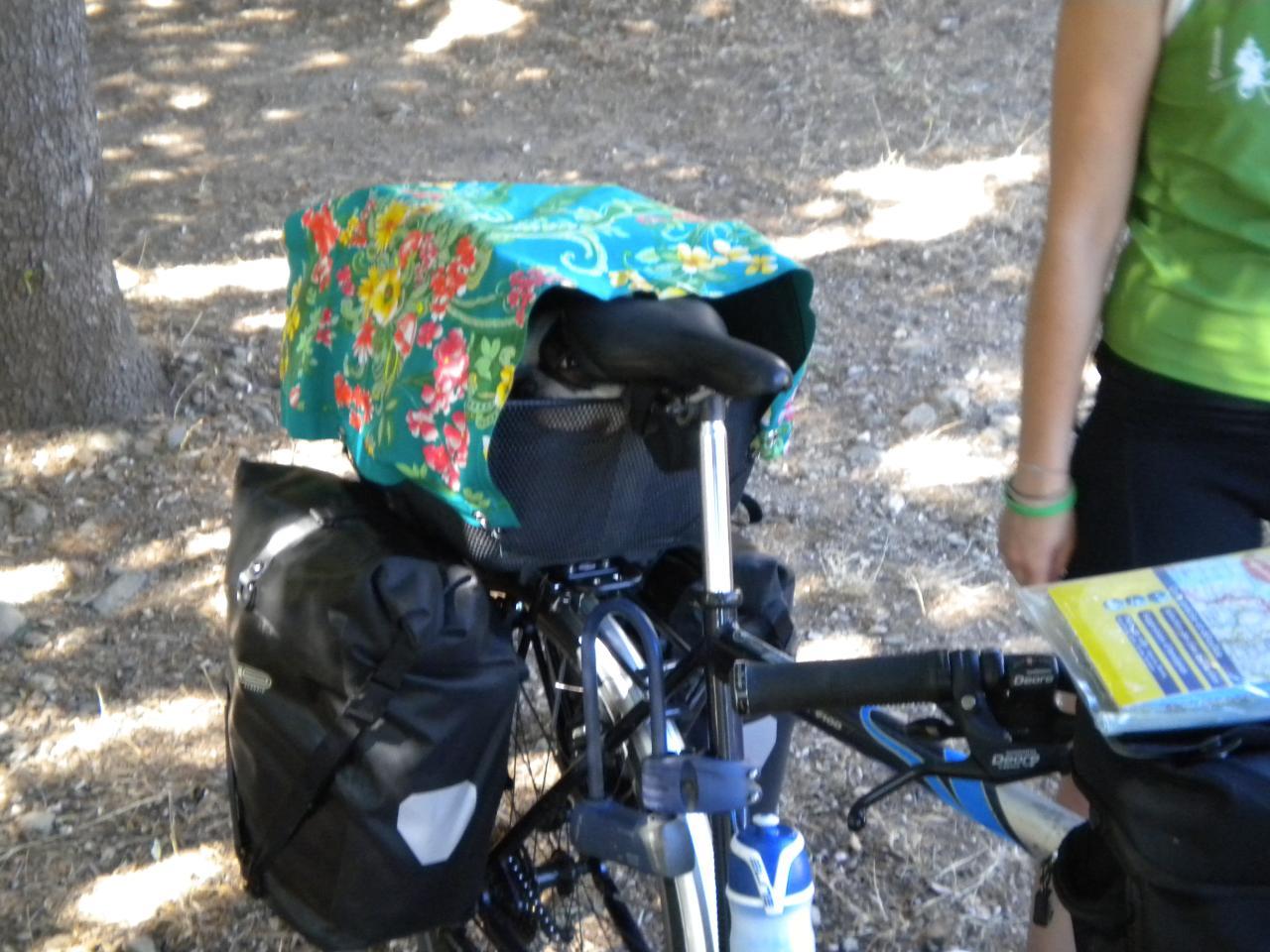 Equipaggiamento bici viaggiare con il cane