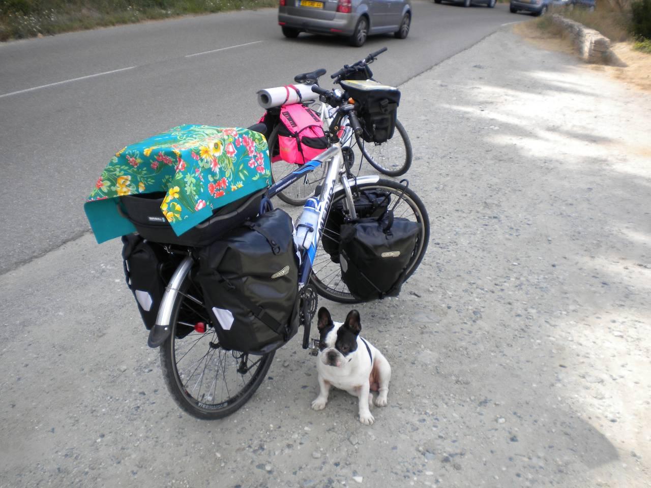 viaggiare in bici con il cane
