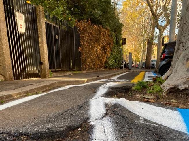 Radici sull'asfalto della ciclabile