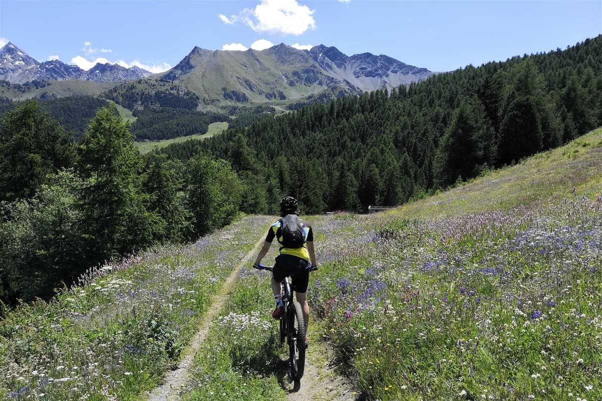 Prato fiorito montagne Valle d'Aosta